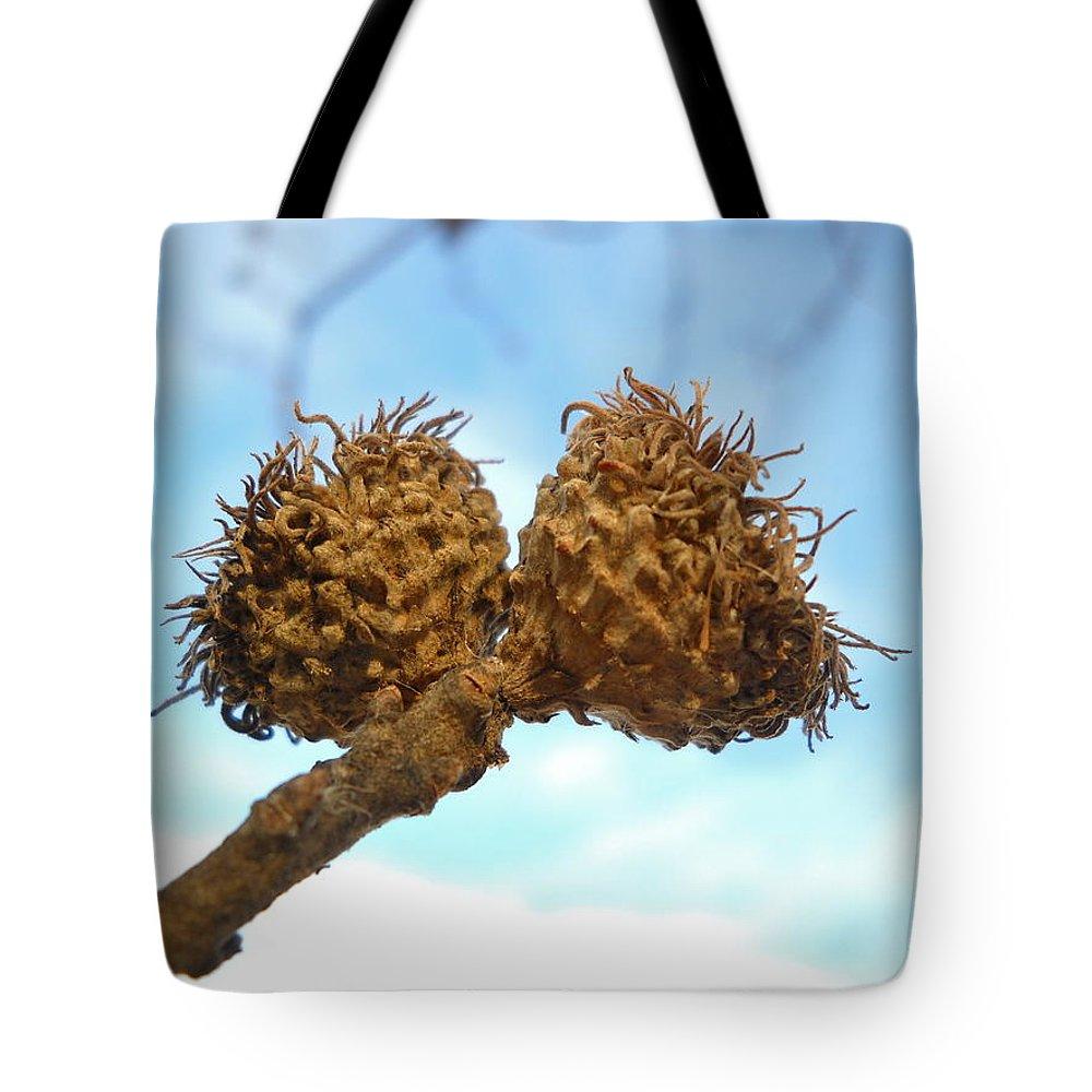 Acorn Tote Bag featuring the photograph Acorns Have Left The Nest by Kent Lorentzen