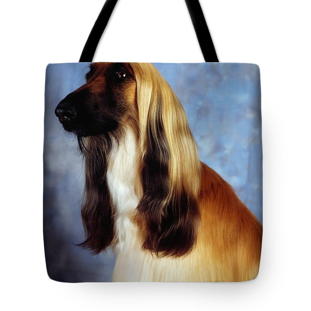 Animals Tote Bag featuring the photograph Afghan Hound by The Irish Image Collection