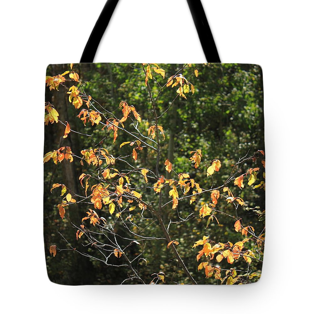 Trees Tote Bag featuring the photograph Aflame by Jim Sauchyn