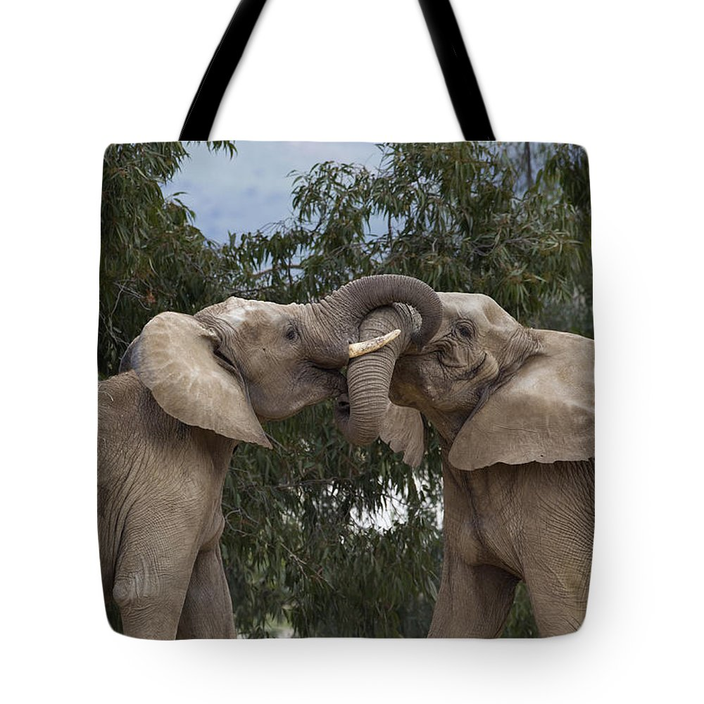 Mp Tote Bag featuring the photograph African Elephant Loxodonta Africana by Zssd