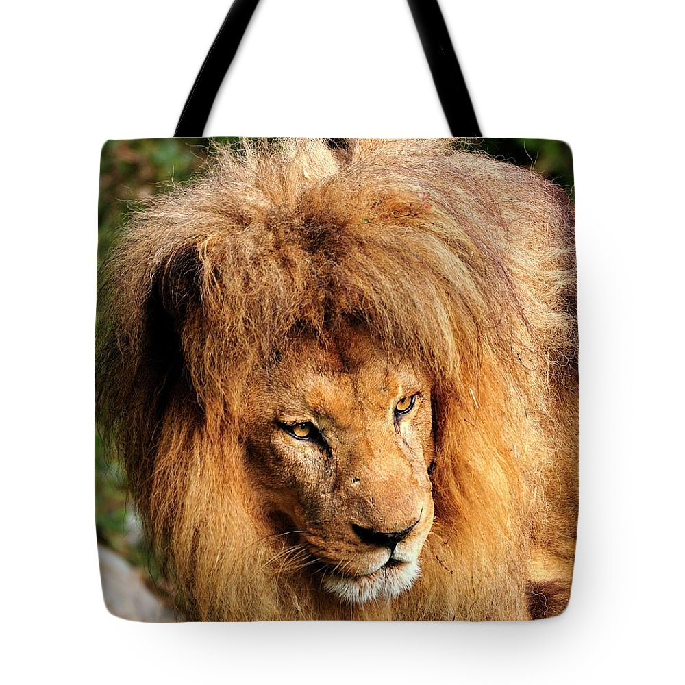 African Tote Bag featuring the photograph African Lion by Bill Dodsworth