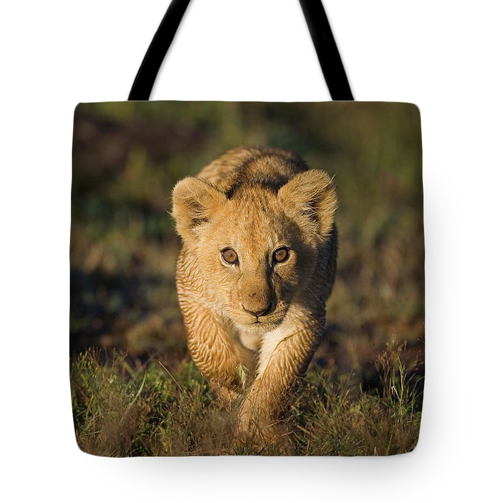 Mp Tote Bag featuring the photograph African Lion Panthera Leo Cub, Masai by Suzi Eszterhas