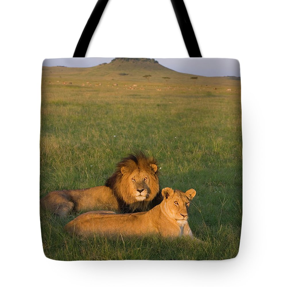 Mp Tote Bag featuring the photograph African Lion Panthera Leo Male by Suzi Eszterhas
