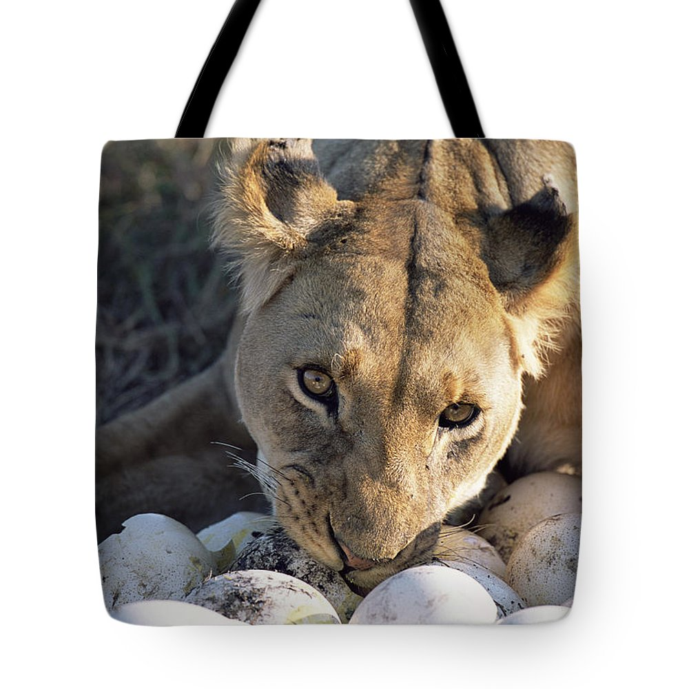 Npl Tote Bag featuring the photograph African Lion Panthera Leo Raiding by Peter Blackwell