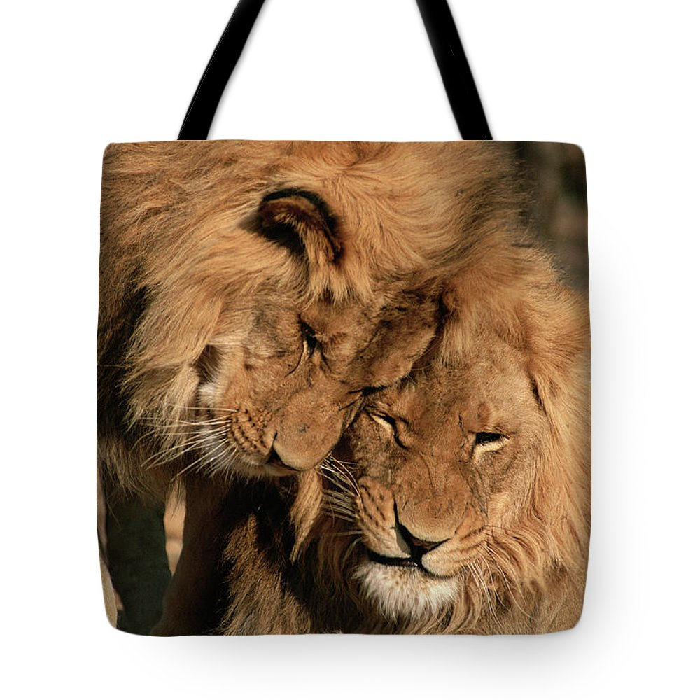 Mp Tote Bag featuring the photograph African Lion Panthera Leo Two Males, Mt by Michael & Patricia Fogden