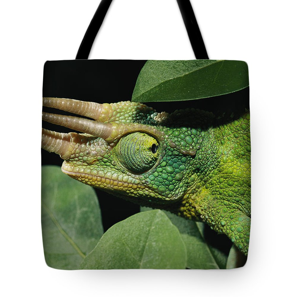Portraits Tote Bag featuring the photograph African Male Jacksons Chameleon by Darlyne A. Murawski