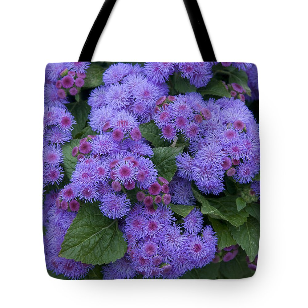 Vp Tote Bag featuring the photograph Ageratum Ageratum Sp Ariella Power by VisionsPictures