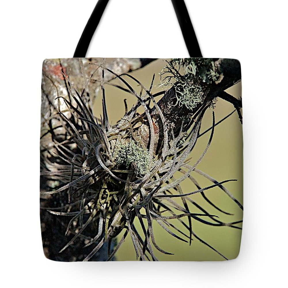 Air Plant Tote Bag featuring the photograph Air Plant by Joseph Yarbrough