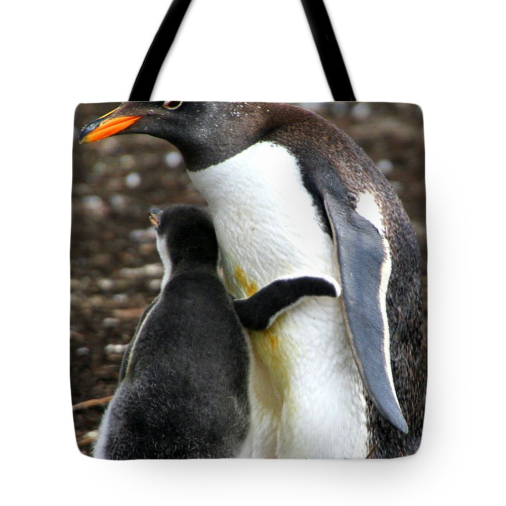 Gentoo Tote Bag featuring the photograph All I Need Is A Hug by Laurel Talabere