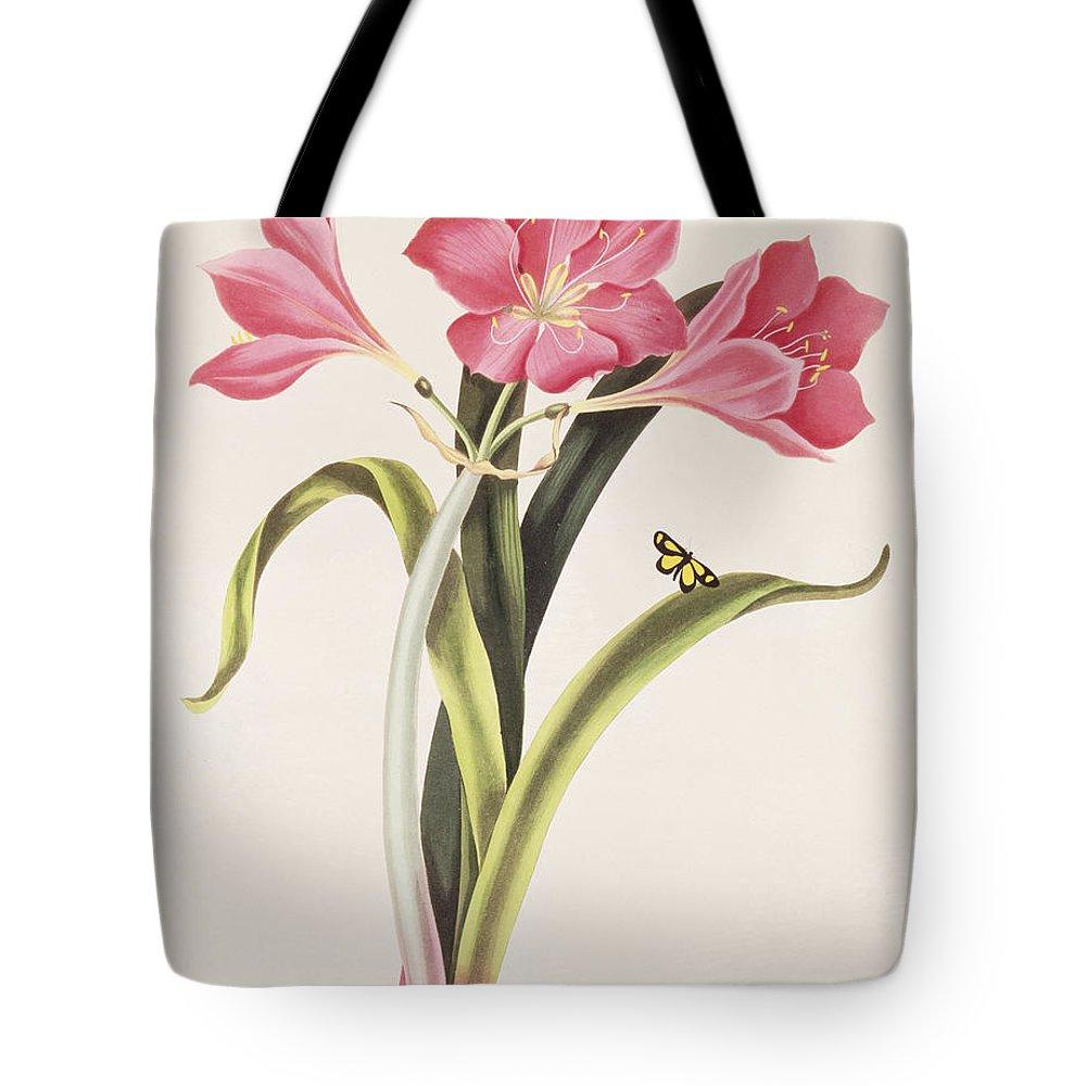 Amaryllis Purpurea Tote Bag featuring the painting Amaryllis Purpurea by Robert Havell