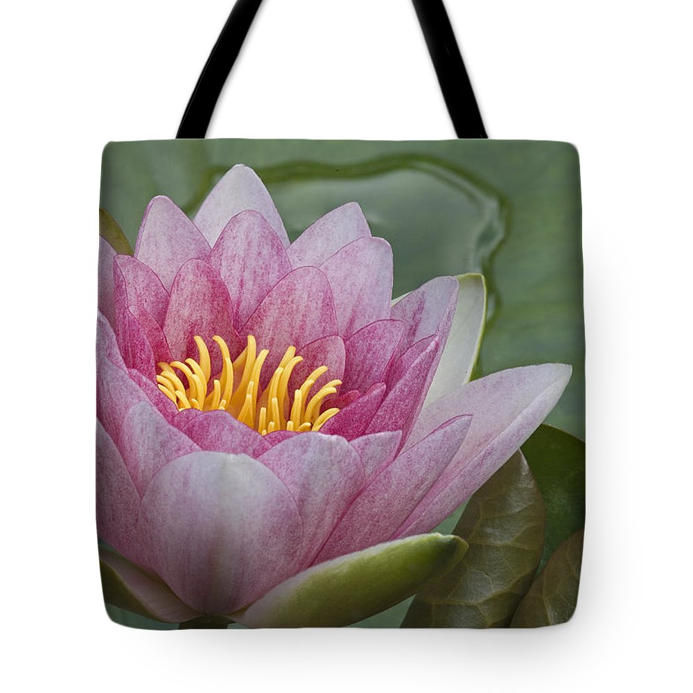 Fn Tote Bag featuring the photograph Amazon Water Lily Victoria Amazonica by Joke Stuurman