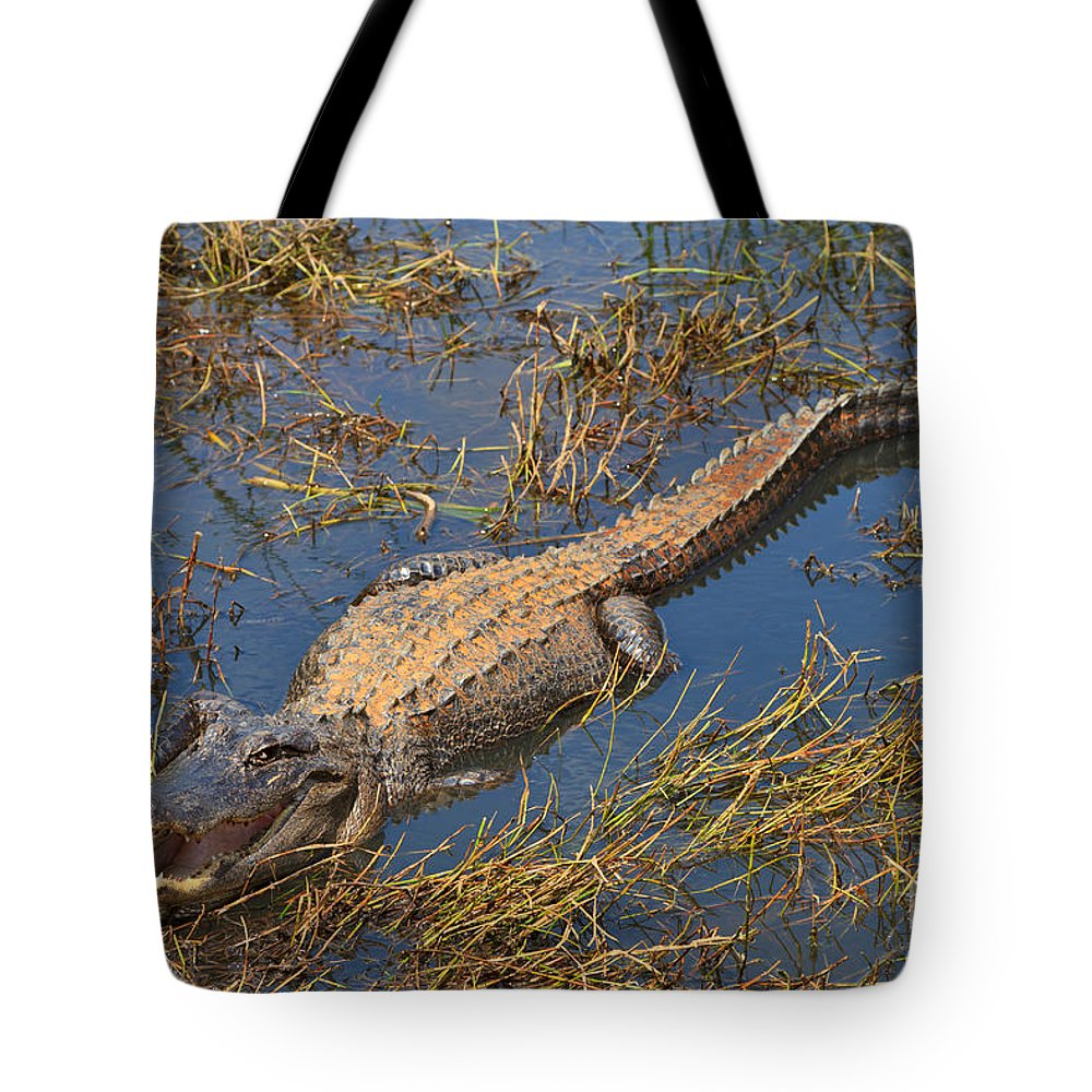 American Tote Bag featuring the photograph American Alligator by Louise Heusinkveld