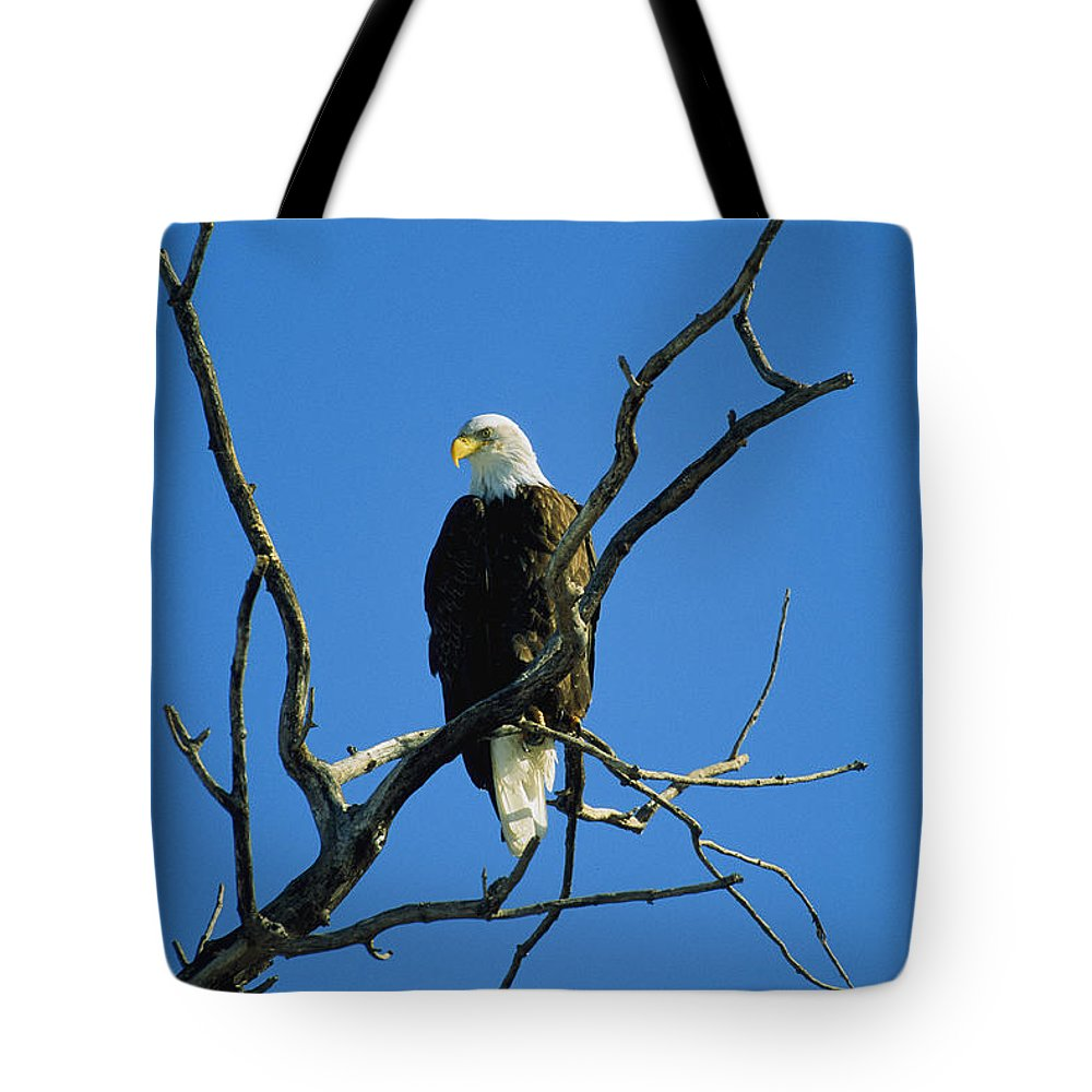 Animals Tote Bag featuring the photograph American Bald Eagle Haliaeetus by Joel Sartore