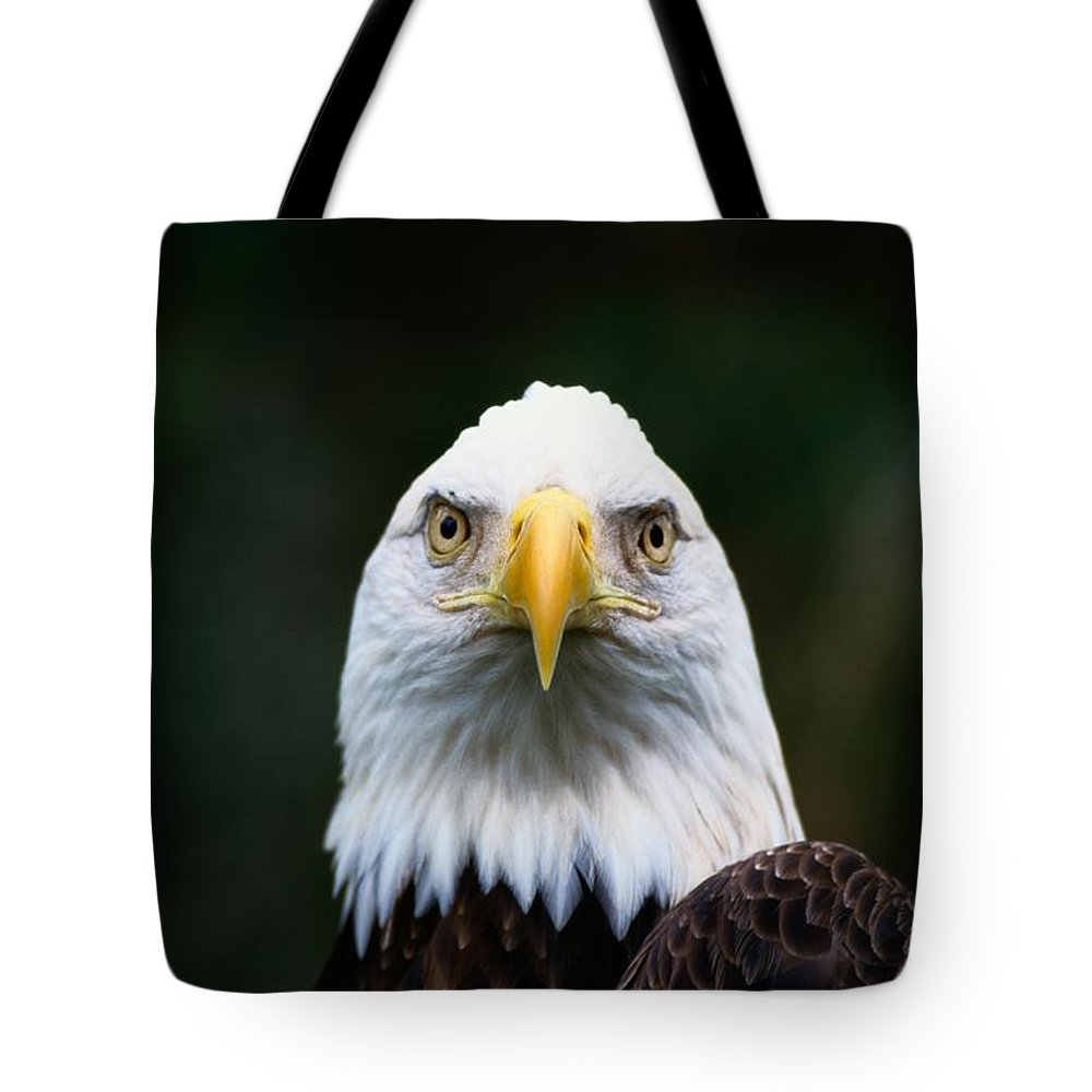North America Tote Bag featuring the photograph American Bald Eagle Haliaeetus by Norbert Rosing