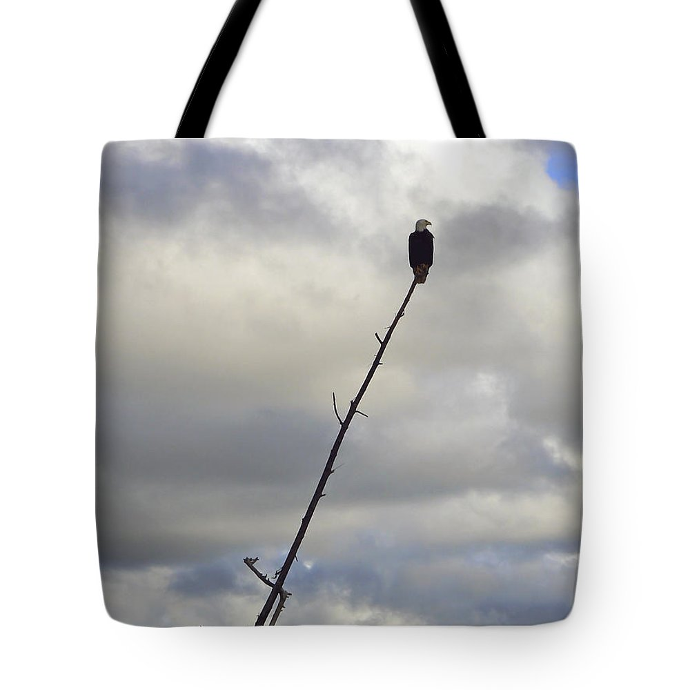 Eagle Tote Bag featuring the photograph American Bald Eagle by Pamela Patch