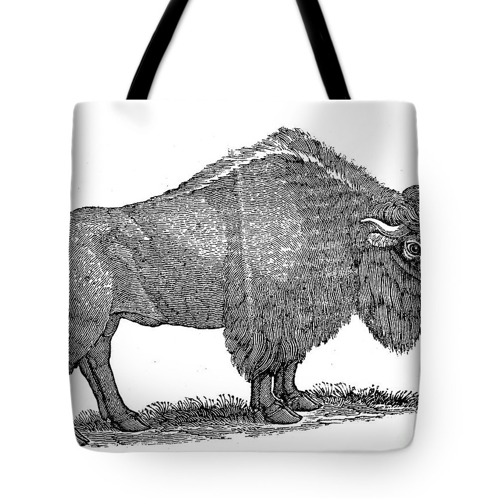 1840 Tote Bag featuring the photograph American Buffalo by Granger