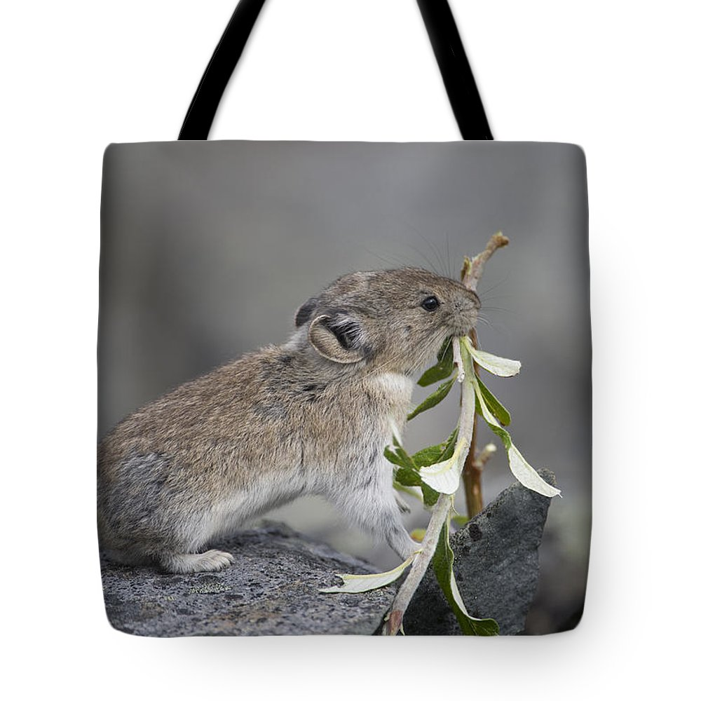 Mp Tote Bag featuring the photograph American Pika by Michael Quinton