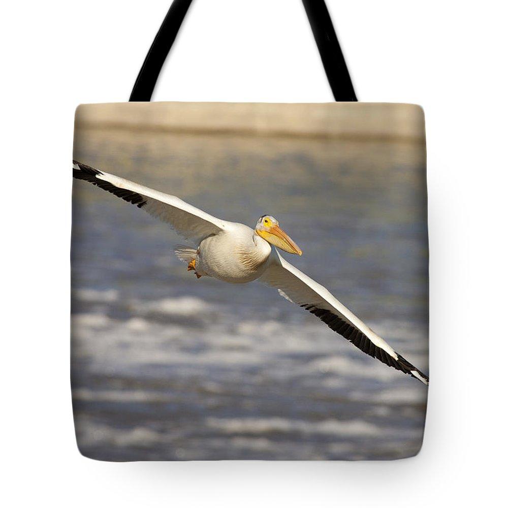 Mp Tote Bag featuring the photograph American White Pelican Pelecanus by Matthias Breiter