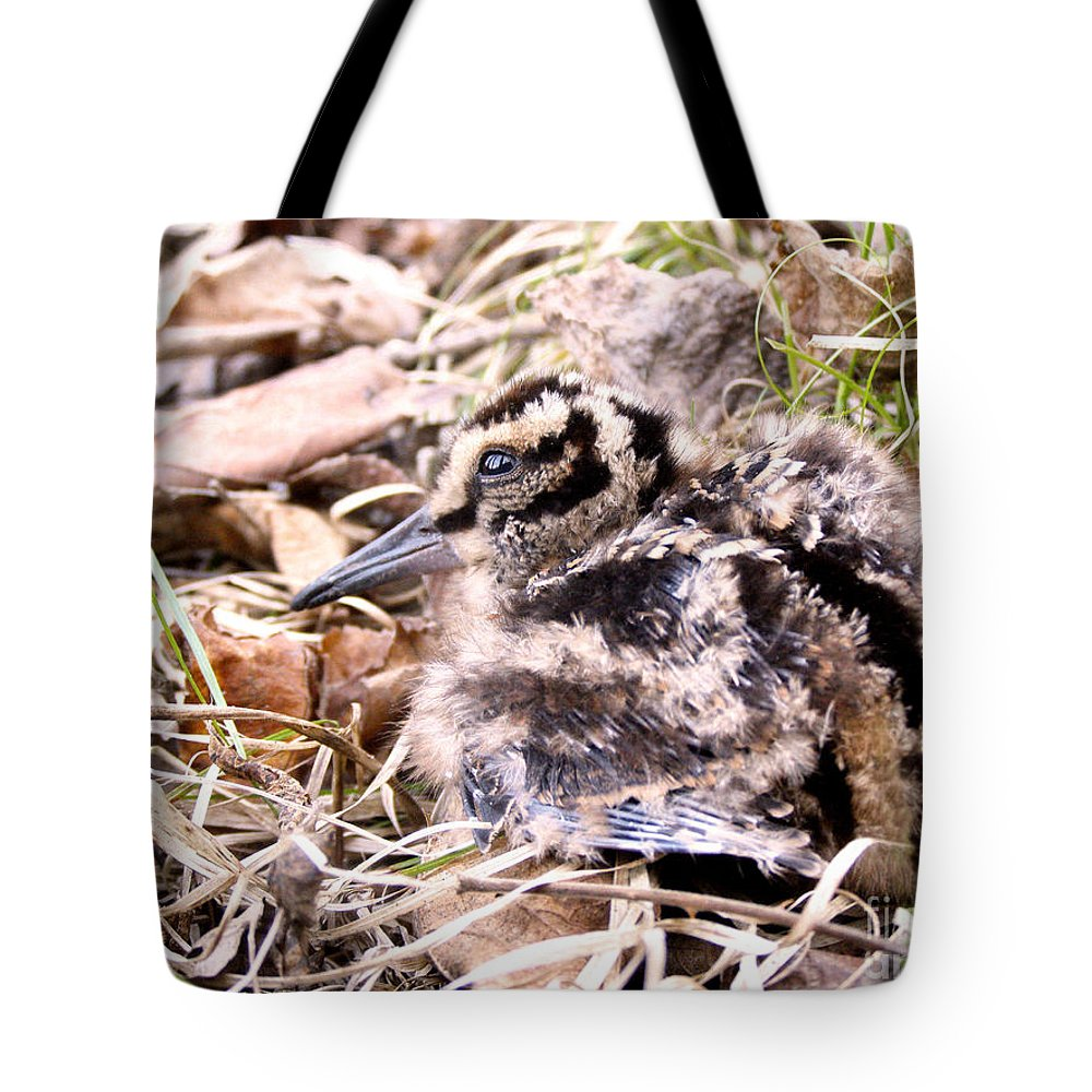 Woodcock Tote Bag featuring the photograph American Woodcock Chick by Angie Rea