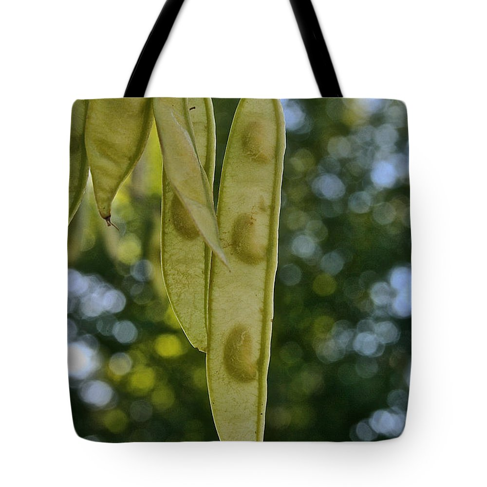 Tree Tote Bag featuring the photograph Amur Amaackia Seeds by Susan Herber
