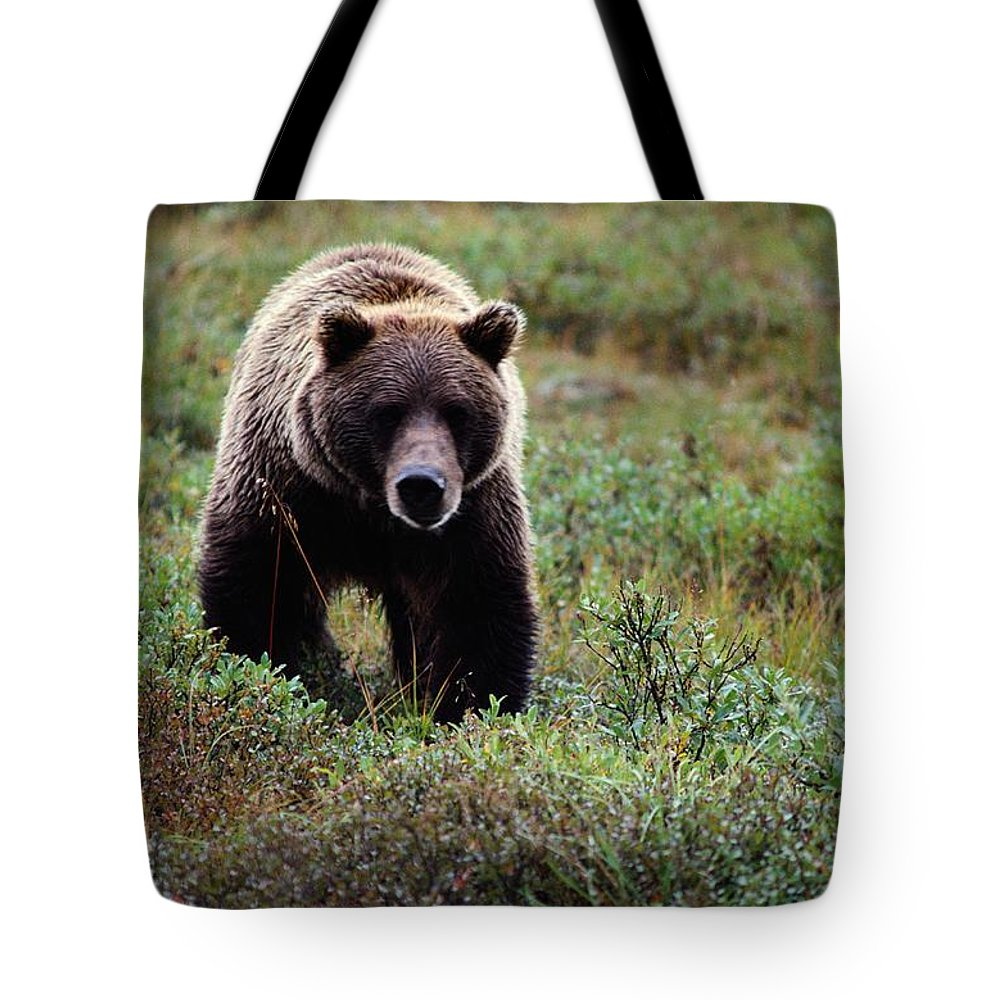 Animals Tote Bag featuring the photograph An Alaskan Brown Bear Lopes by Anne Keiser