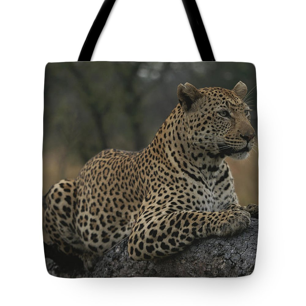 Africa Tote Bag featuring the photograph An Alert Leopard Rests On A Fallen Tree by Kim Wolhuter
