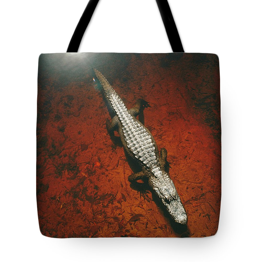 Okefenokee National Wildlife Refuge Tote Bag featuring the photograph An Alligator Walks On The Muddy Bottom by Melissa Farlow