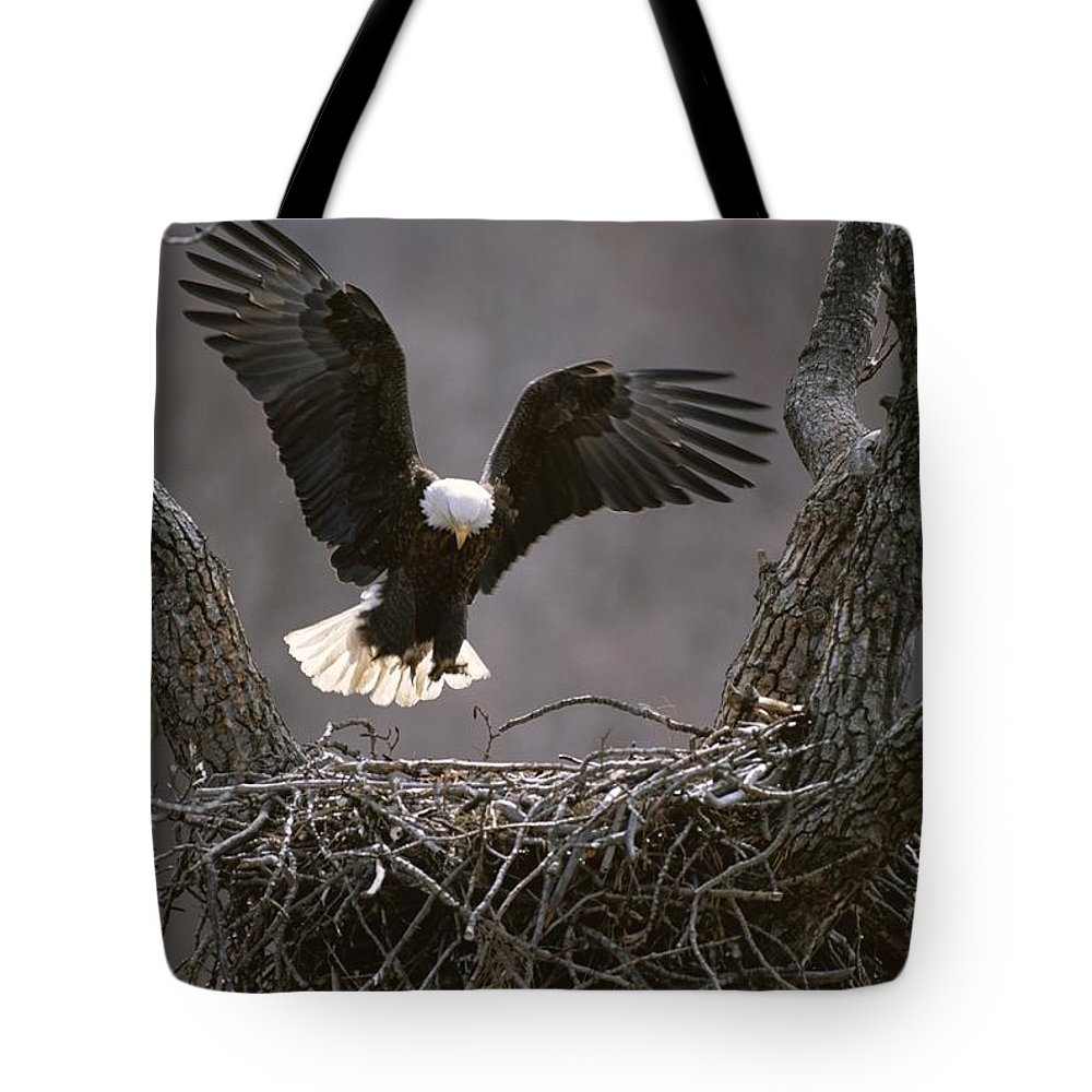 North America Tote Bag featuring the photograph An American Bald Eagle Flies by Roy Toft