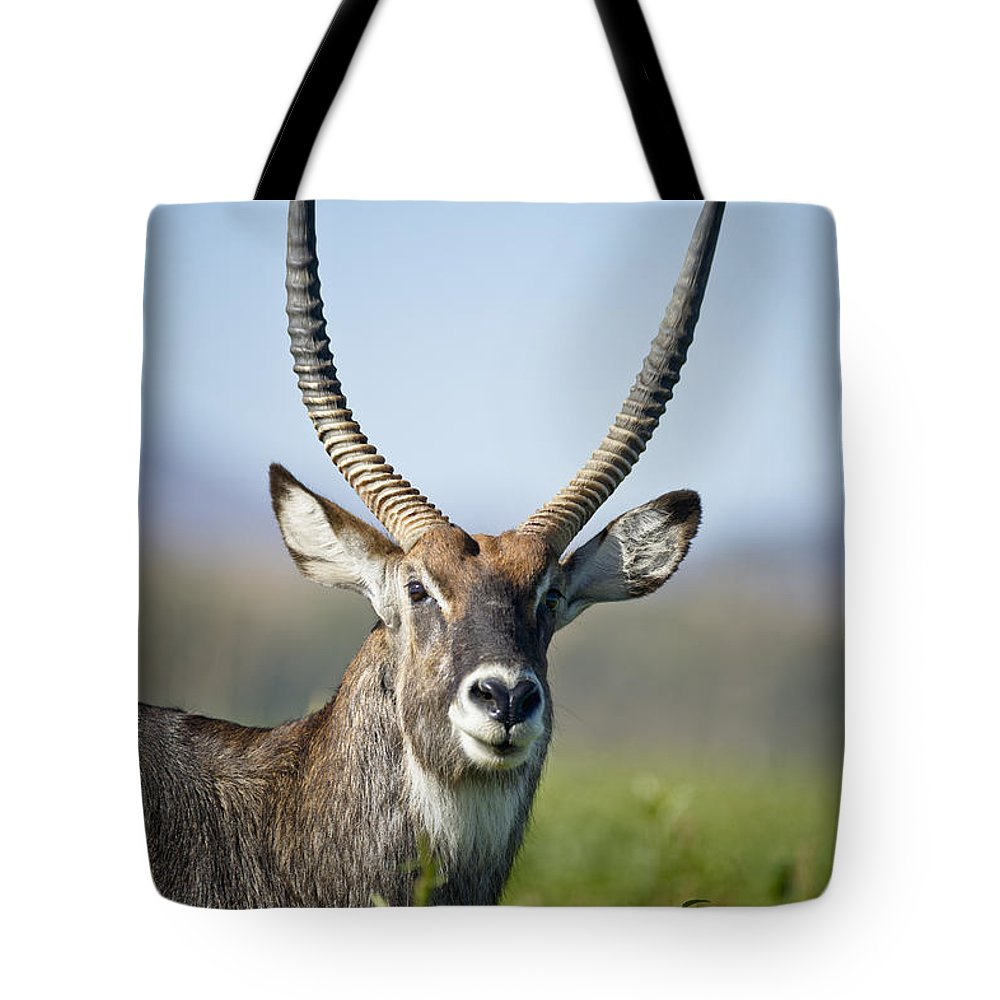 African Wildlife Tote Bag featuring the photograph An Antelope Standing Amongst Tall by David DuChemin