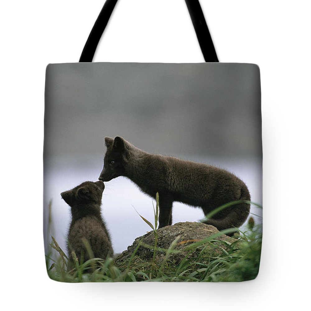 North America Tote Bag featuring the photograph An Arctic Fox And Her Kit. The Foxes by Joel Sartore