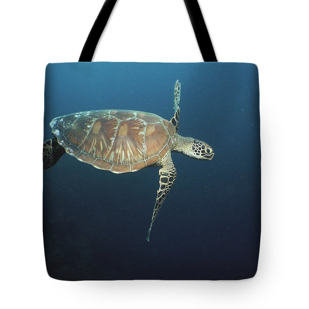 Asia Tote Bag featuring the photograph An Endangered Green Sea Turtle Swimming by Tim Laman