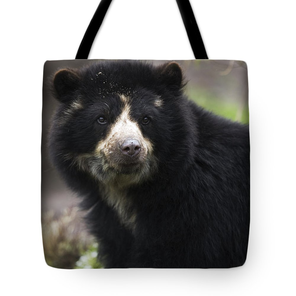 Alertness Tote Bag featuring the photograph Andean Or Spectacled Bear, Tremarctos by Philippe Henry