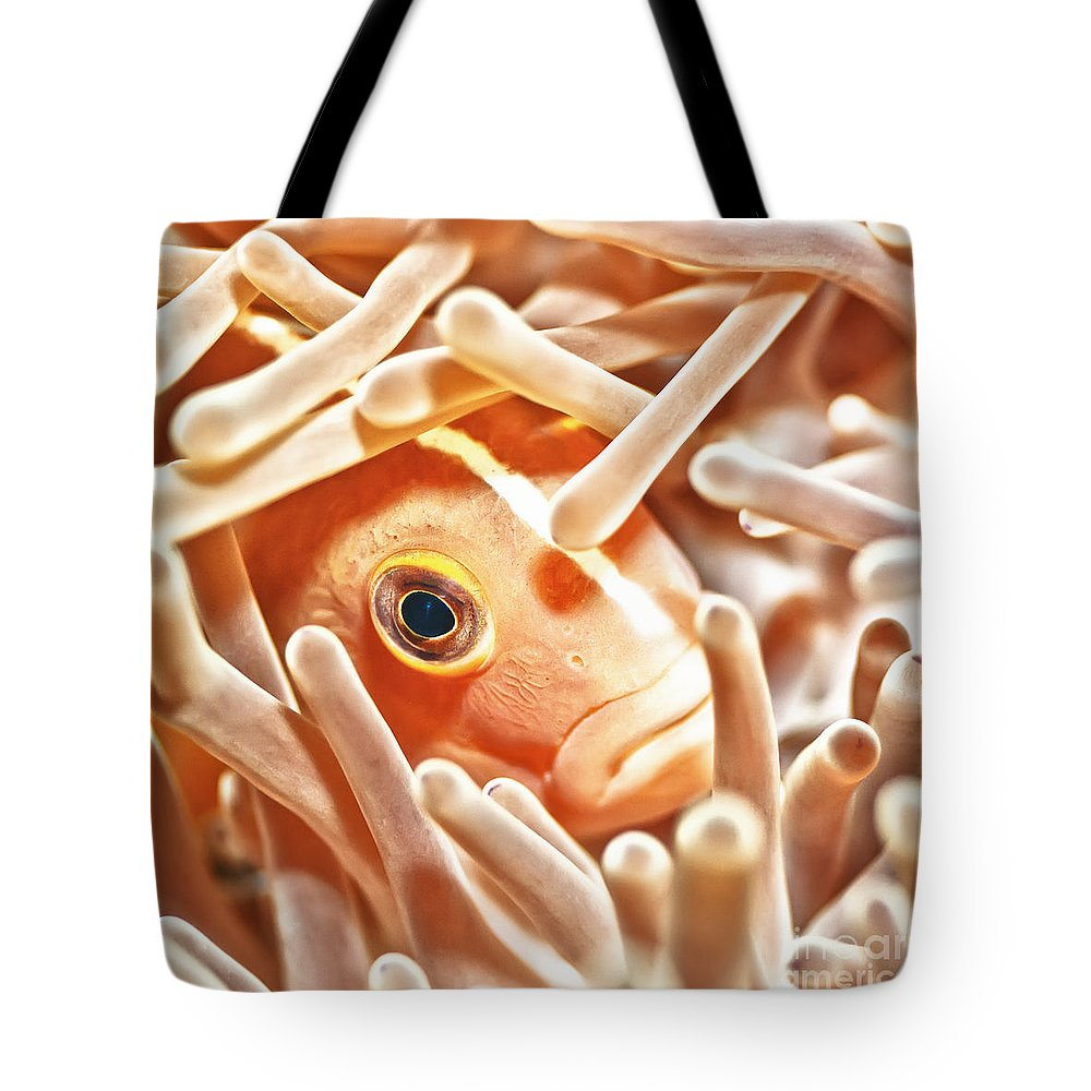 Anemonefish Tote Bag featuring the photograph Anemonefish Closeup by MotHaiBaPhoto Prints