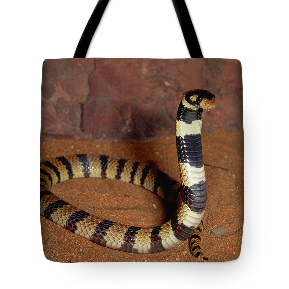 Mp Tote Bag featuring the photograph Angolan Coral Snake Defensive Display by Michael and Patricia Fogden