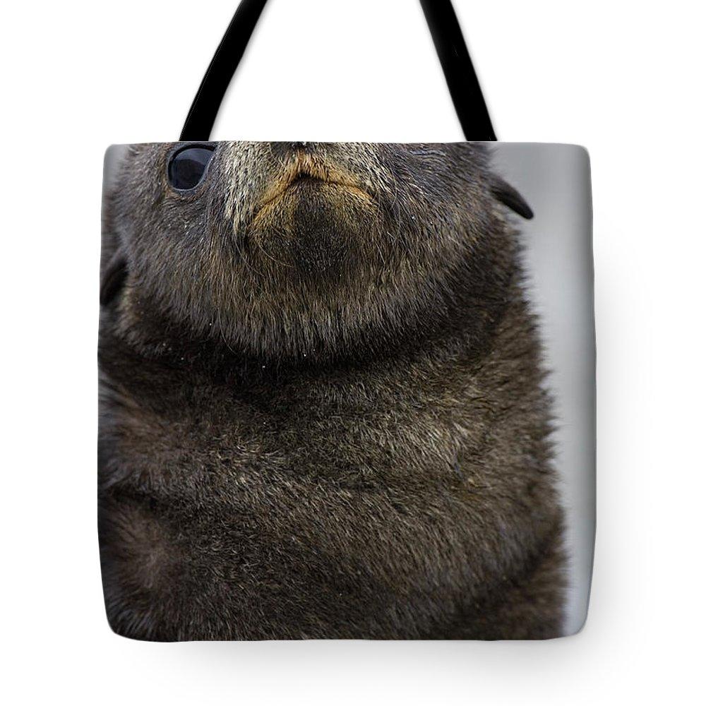 Mp Tote Bag featuring the photograph Antarctic Fur Seal Arctocephalus by Suzi Eszterhas