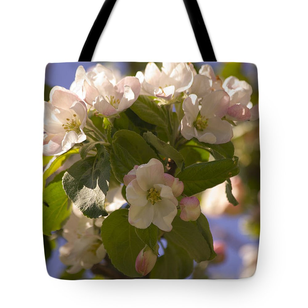 Apple Tote Bag featuring the photograph Apple Blossoms 3 by Lorraine Vatcher