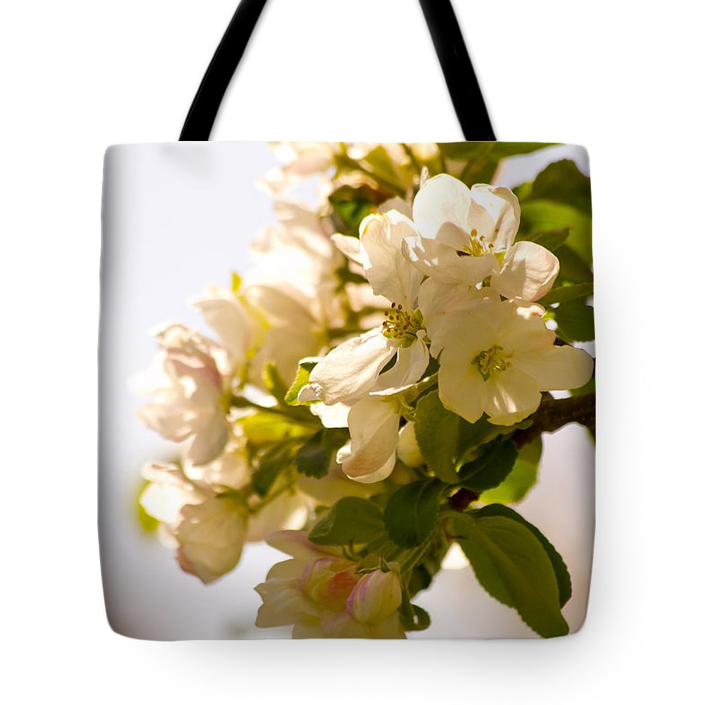 : Apple Photographs Tote Bag featuring the painting Apple Blossoms 9 by Lorraine Vatcher