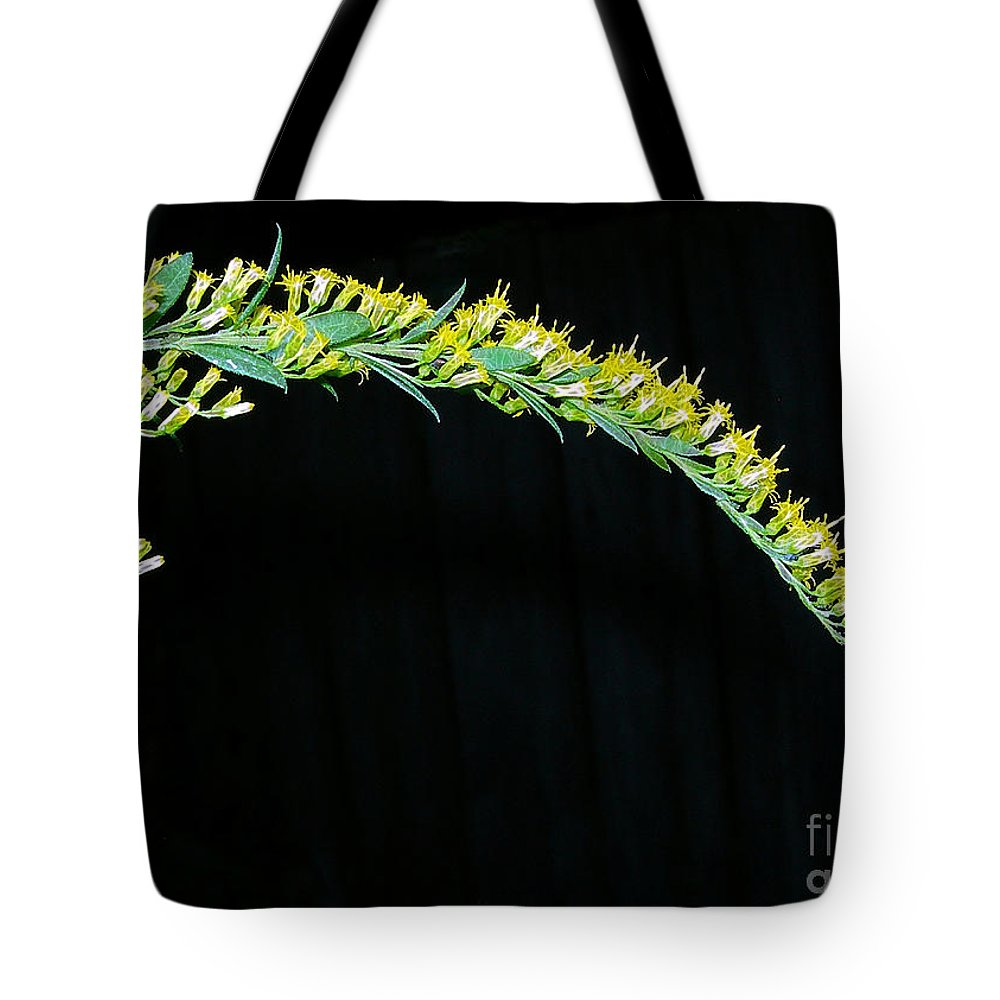 Goldenrod Tote Bag featuring the photograph Arching Goldenrod by Judi Bagwell