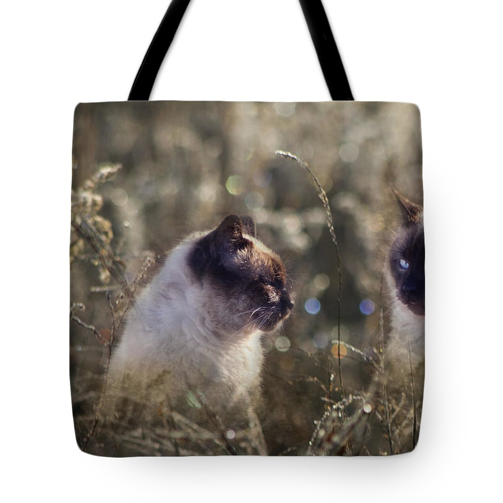 Siamese Tote Bag featuring the photograph Are You Dreaming About Me - Siamese Feral Cat by Kathy Clark
