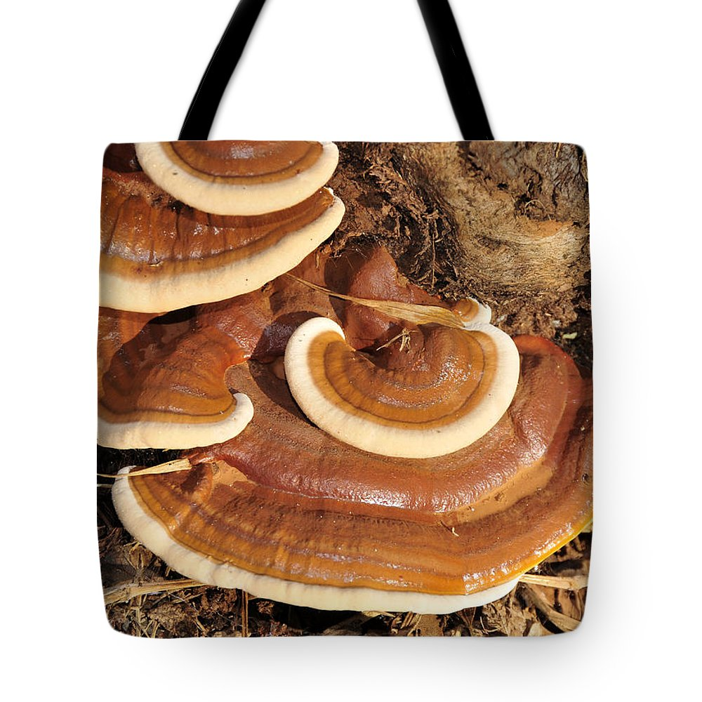 Fine Art Photography Tote Bag featuring the photograph Artists Fungus by David Lee Thompson