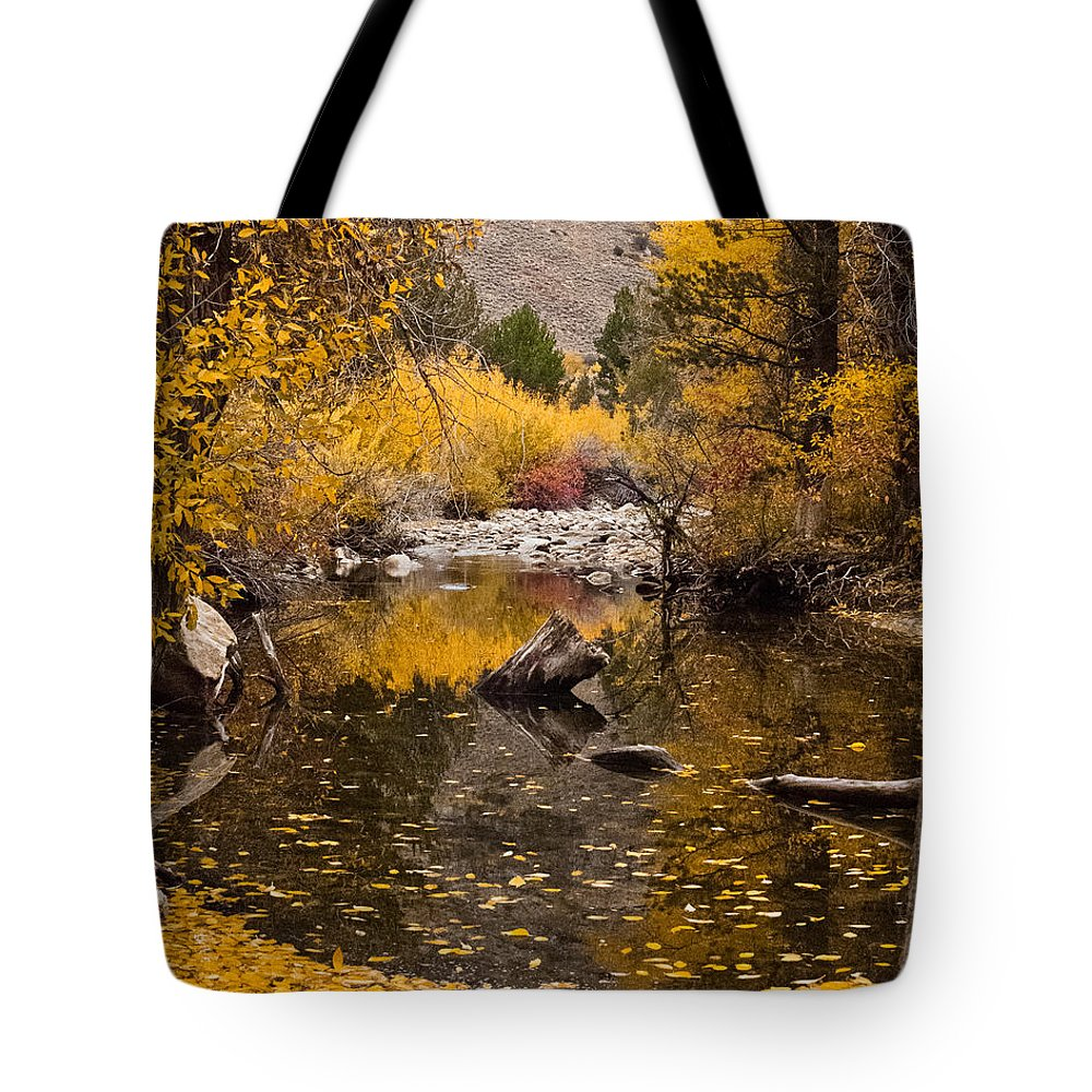 Aspen Leaves Tote Bag featuring the photograph Aspen Leaves On Stream by L J Oakes
