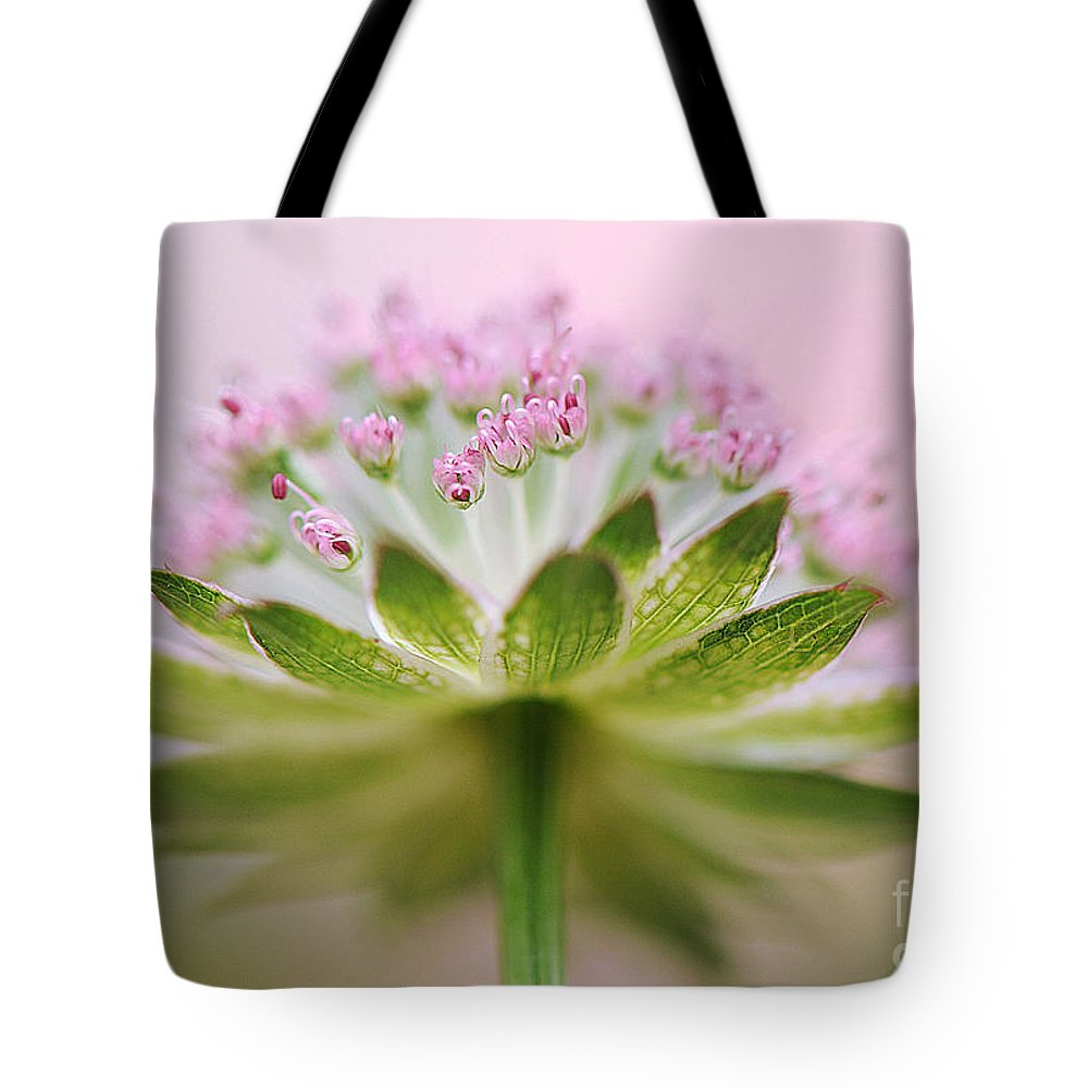 Astrantia Tote Bag featuring the photograph Astrantia Splash by Jacky Parker