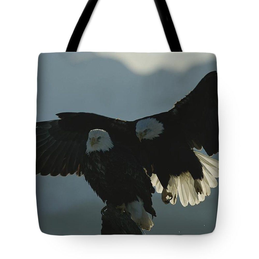North America Tote Bag featuring the photograph Attempting To Take Over A Northern by Norbert Rosing