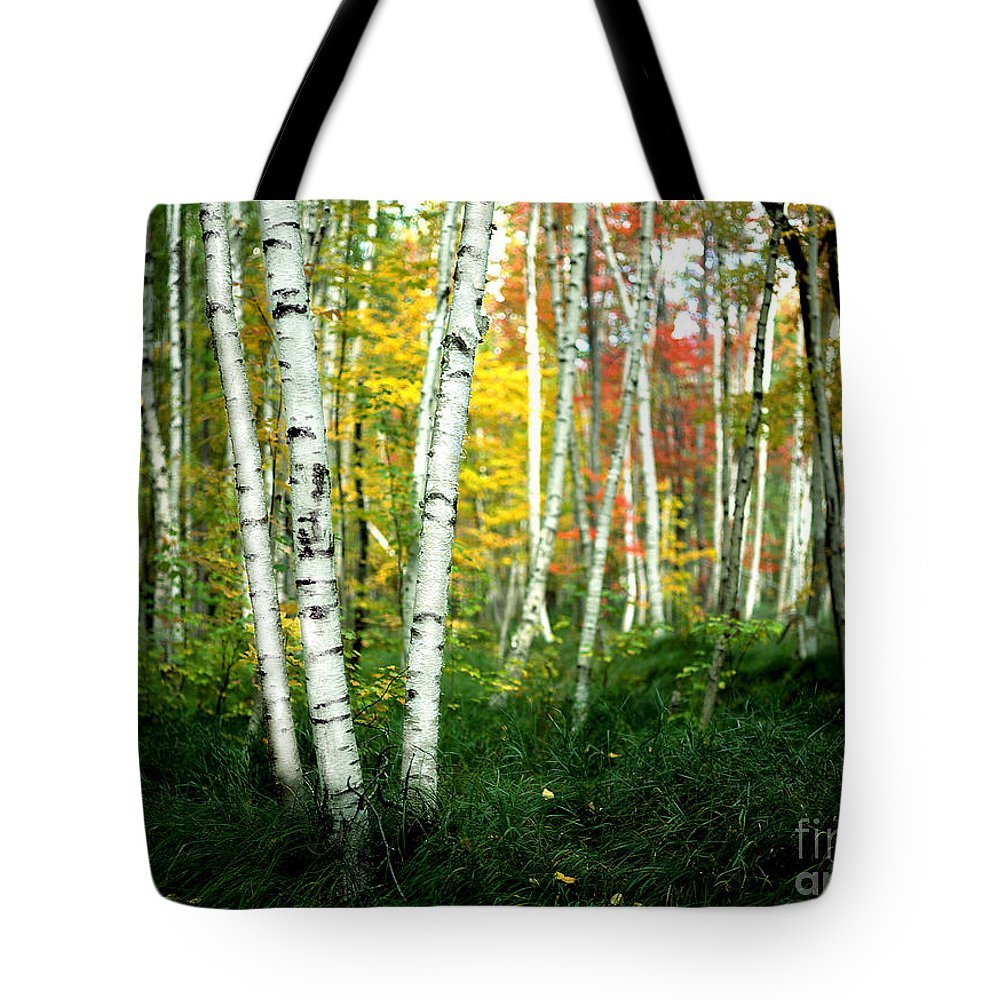 Autumn Tote Bag featuring the photograph Autumn Birch Grove by Mike Nellums
