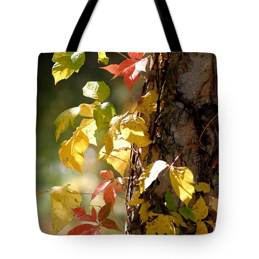 Autumn Tote Bag featuring the photograph Autumn Colors by Living Color Photography Lorraine Lynch