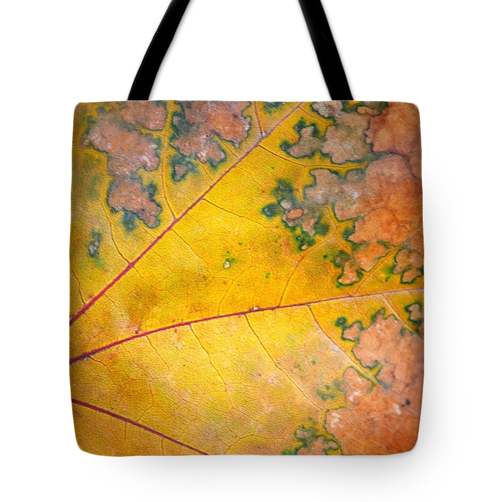 Leaf Tote Bag featuring the photograph Autumn Leaf Abstract by Tara Turner
