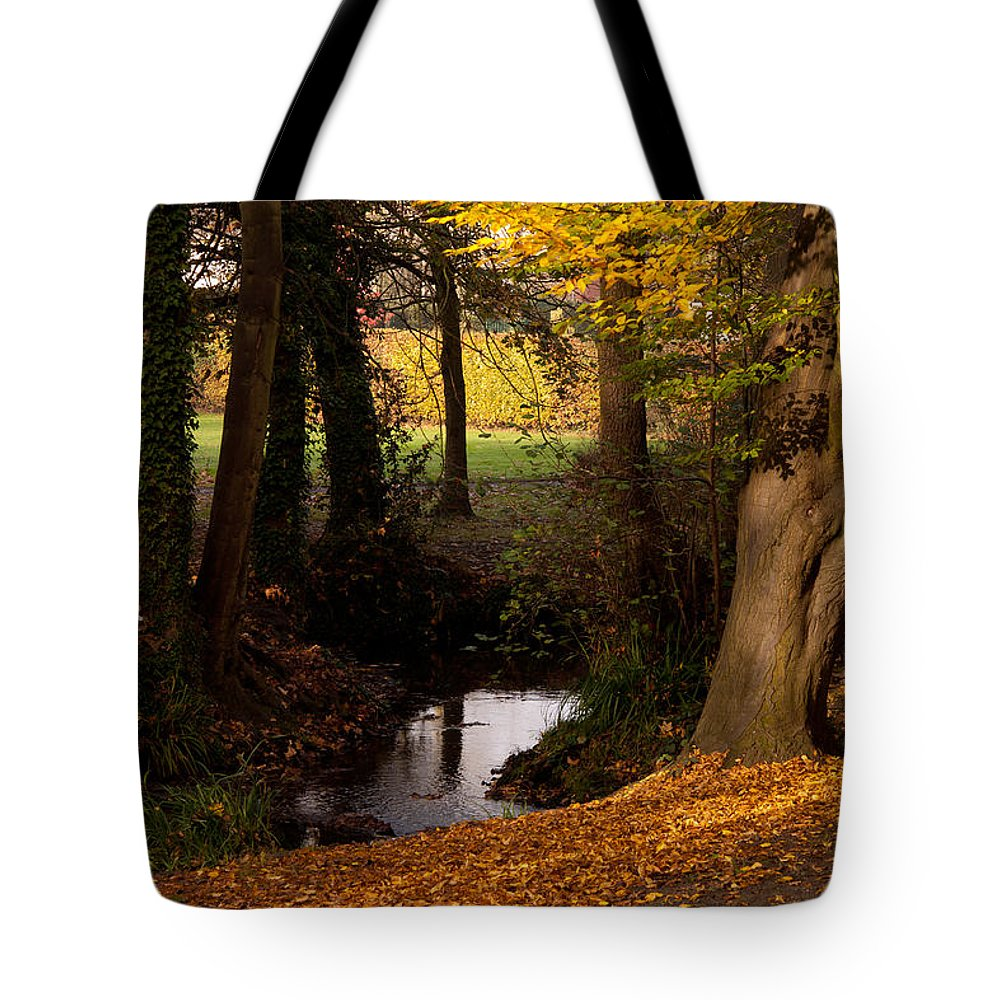 Sunlight Tote Bag featuring the photograph Autumn Leaves by Dawn OConnor