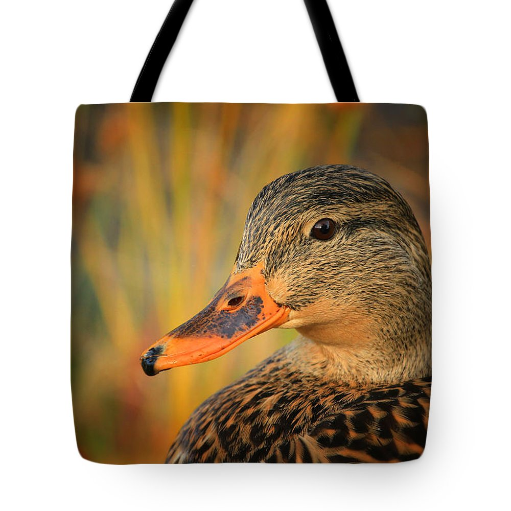 Mallard Tote Bag featuring the photograph Autumn Mallard by Karol Livote