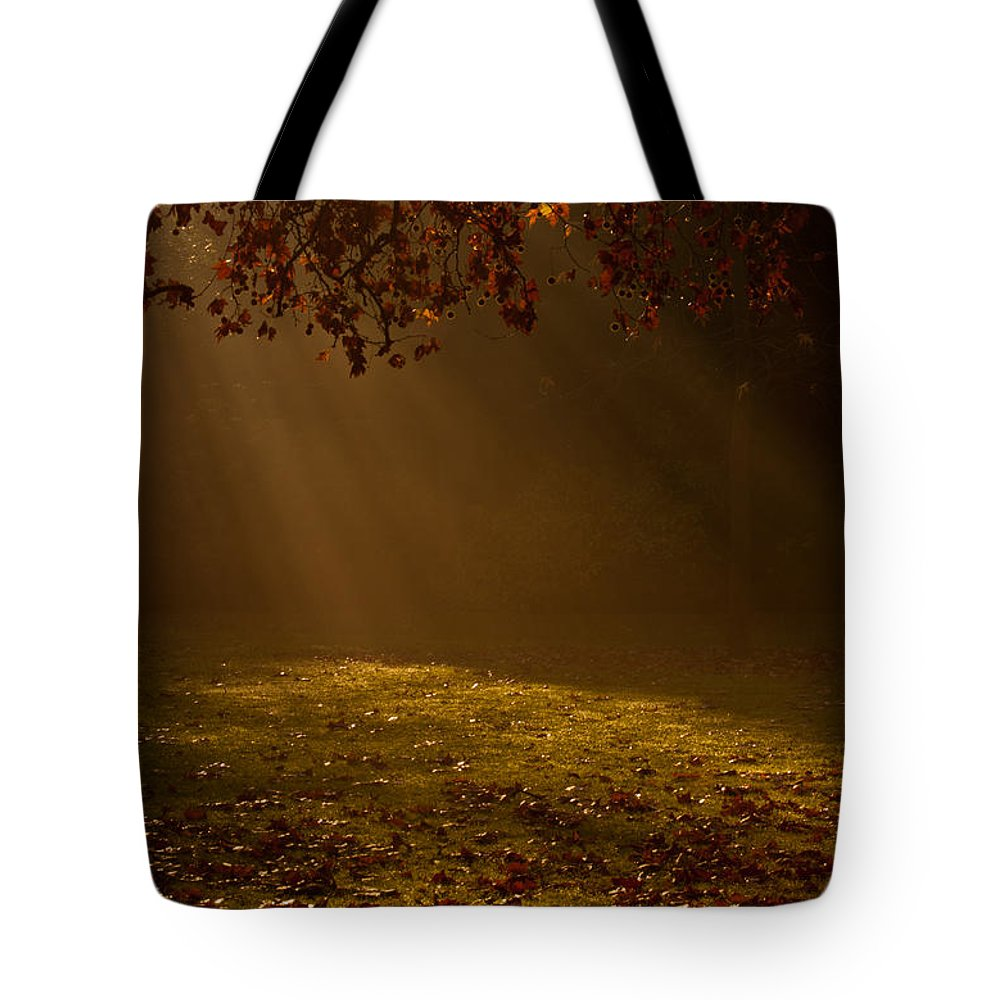 Sunlight Tote Bag featuring the photograph Autumn Mist by Dawn OConnor