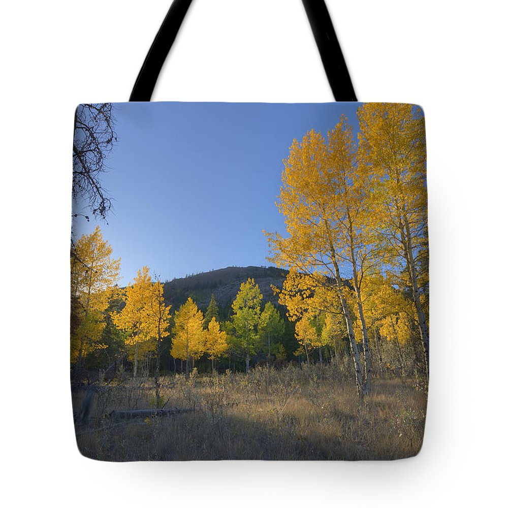 Autumn Tote Bag featuring the photograph Autumn Sunset In Forest Of Golden Aspen by Dan Jurak